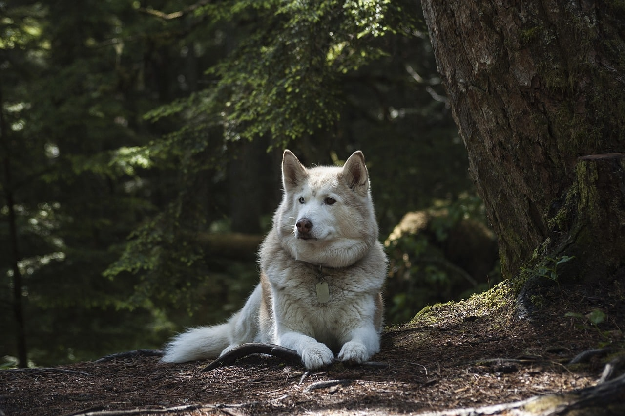forest, dog, canine